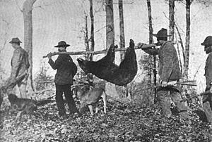 Bear hunting in Tennessee was similar to hunting in Texas.  Just avoid wild hogs.  (Wikipedia)
